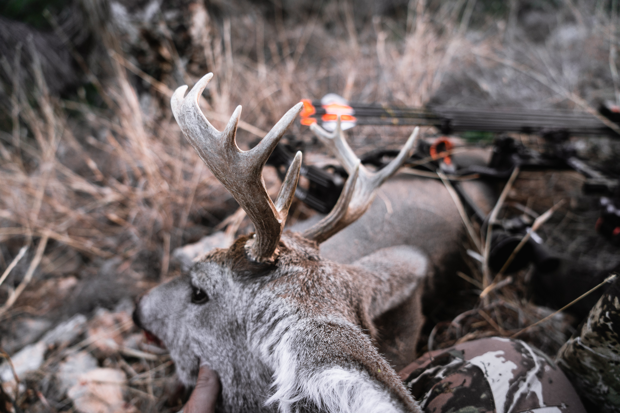 Improving Archery Accuracy for Better Bowhunting: Our 3 Tips for Success